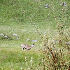 拉馬爾山谷用戶圖片