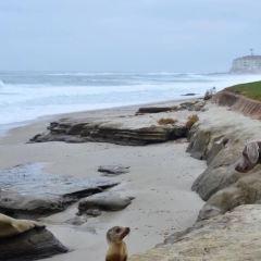 La Jolla Shores User Photo