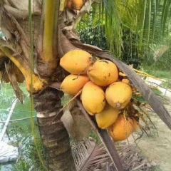 Dongjiao Coconut Plantations User Photo