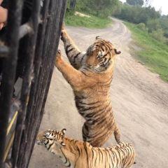 東北虎林園用戶圖片