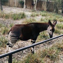 休士頓動物園用戶圖片