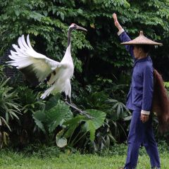Chimelong Bird Park User Photo
