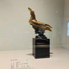 Chenxiang Museum User Photo