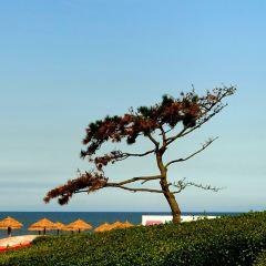 Country Garden Golden Beach Hotel User Photo
