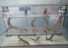 北榄鳄鱼湖动物园-Thai Ban-小凌60