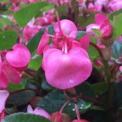 Heilongjiang Forest Botanical Garden User Photo