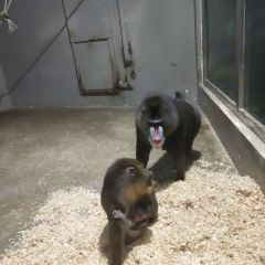 成都動物園のユーザー投稿写真