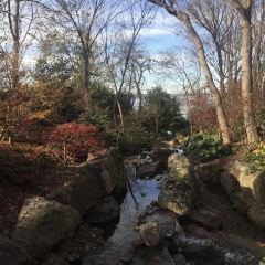 達拉斯植物園用戶圖片