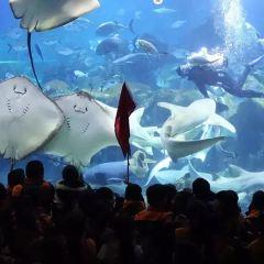 長沙海底世界用戶圖片
