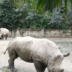 Chengdu Zoo User Photo