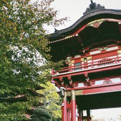 일본 티 가든 여행 사진