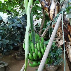 Jifa Agricultural Demonstration Tourist Park User Photo