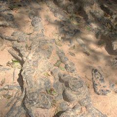 바욘 사원 여행 사진
