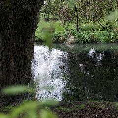 雅芳河用戶圖片