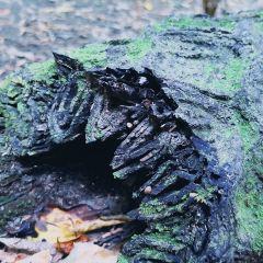 西蘭蒂亞生動植物保護區用戶圖片