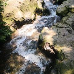 버드 싱잉 우즈 동물원  (빈하이중루점) 여행 사진