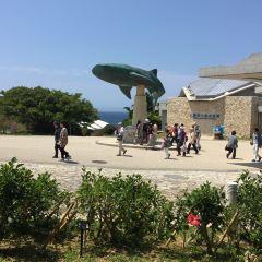 추라우미 수족관 여행 사진