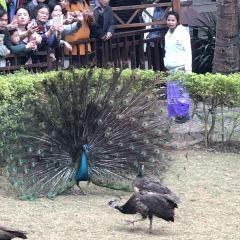 Xishuangbanna Primeval Forest Park User Photo