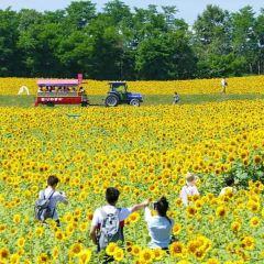 Ozora-cho Sunflower Farm User Photo