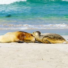 Seal Bay User Photo