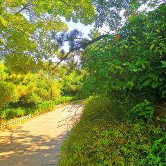 신호산 공원 여행 사진