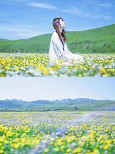 俄么塘花海景区-红原-吴所畏_