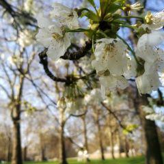 Kensington Gardens User Photo