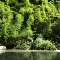 杉木河漂流用戶圖片