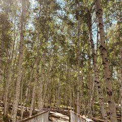 백화림관광구 여행 사진