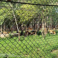 동북호랑이공원 여행 사진
