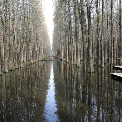 Lizhong Water Forest Park User Photo