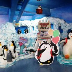 青島海昌極地海洋公園用戶圖片
