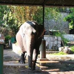 National Zoological Gardens of Sri Lanka User Photo