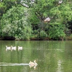 Ibirapuera Park User Photo