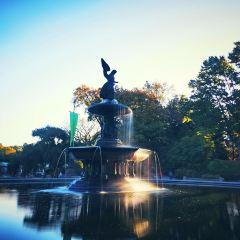 中央公園用戶圖片
