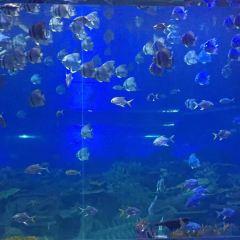 Qinhu Lake Ocean World User Photo