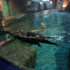Xuzhou Underwater World User Photo