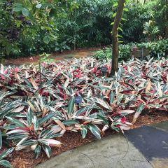 Jeevanjee Gardens用戶圖片