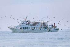 海驴岛-荣成-M22****4422