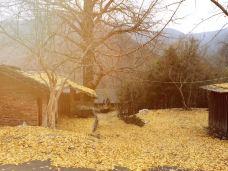 大口国家森林公园-钟祥-M28****359