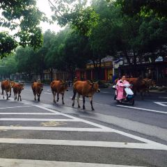 톈타이 현 여행 사진