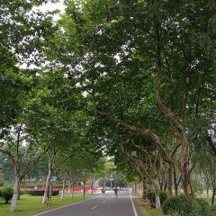 Longbeishan Forest Park User Photo