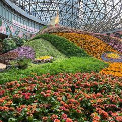 꽃의 도시 여행 사진
