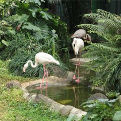 海南熱帶野生動植物園用戶圖片