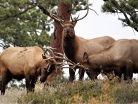 Rocky Mountain National Park: Camping, Map & Entrance Permit 2020