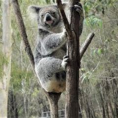 Australia Zoo User Photo