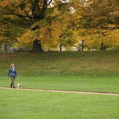 海德公園用戶圖片