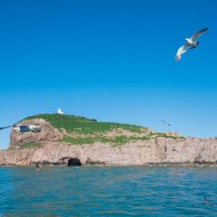 Sea Donkey Island User Photo