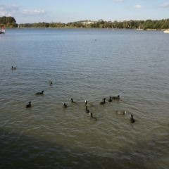 金寧德拉湖用戶圖片