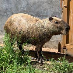 天鵝湖動物基地用戶圖片